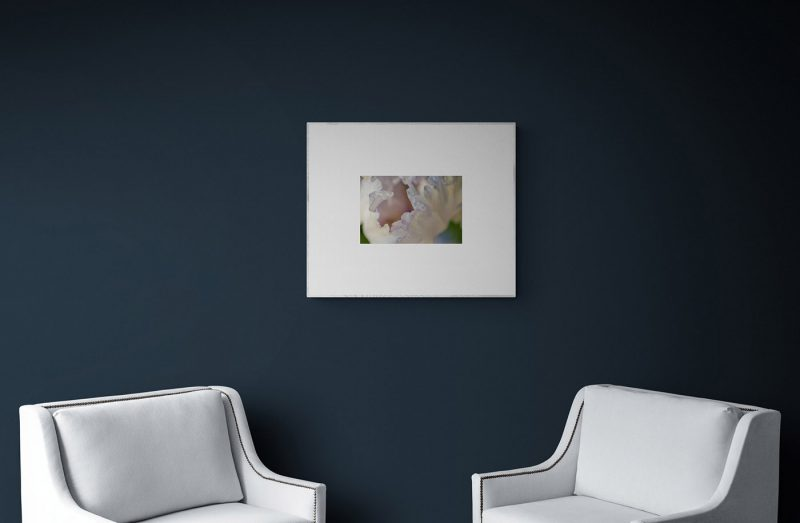 Pétalos azules por Adolfo Gosálvez. Venta de Fotografía de autor en edición limitada. AG Shop