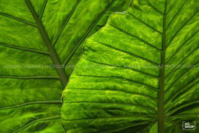Botánica por Adolfo Gosálvez. Venta de Fotografía de autor en edición limitada. AG Shop