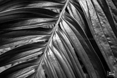 Hojas en blanco y negro por Adolfo Gosálvez. Venta de Fotografía de autor en edición limitada. AG Shop