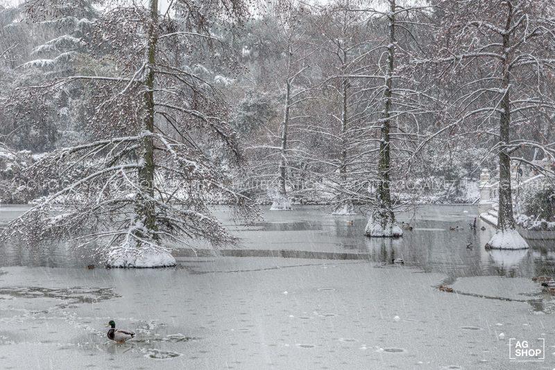 Filomena. Madrid Nevado. Lago del Parque del Retiro por Adolfo Gosálvez. Venta de Fotografía de autor en edición limitada. AG Shop