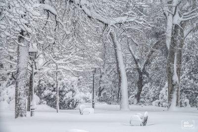 Filomena. Madrid Nevado. Parque del Retiro por Adolfo Gosálvez. Venta de Fotografía de autor en edición limitada. AG Shop