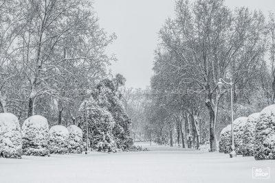 Filomena. Madrid Nevado. Paseo Fernán Núñez en el Parque del Retiro por Adolfo Gosálvez. Venta de Fotografía de autor en edición limitada. AG Shop